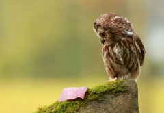 Маленькая сова в шоке картинки