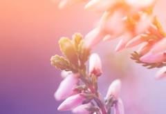 Яркие цветы на солнце картинки на рабочий стол