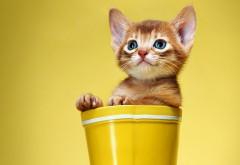 Маленький рыжий котенок в желтом стакане