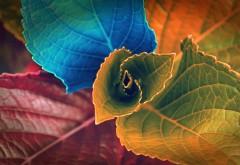 Абстрактные цветные листочки картинки на рабочий стол скачать