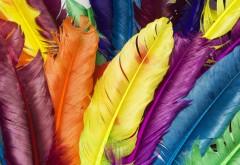 Разноцветные перья абстрактные обои на ПК