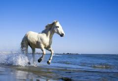 Белая лошадь на морском пляже картинки