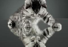 Маленький котик на зеркальном полу скачать обои