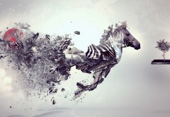 Digital zebra wallpapers high resolution hd
