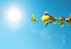 Солнечные птички картинки на рабочий стол скачать фэнтези