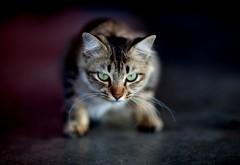 Картинки котенка