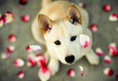 Собака на фоне падающих лепестков цветов обои hd