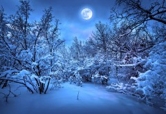 Голубая луна, снег, ночь, лес, зима, сказка, картинки, ск�…