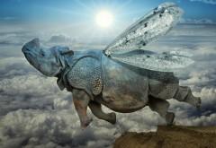 Летающий бегемот, фэнтези картинки, бабочка, небо, скач…