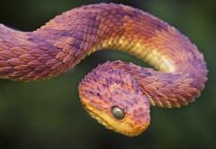 Змея гадюка на дереве картинки скачать бесплатно