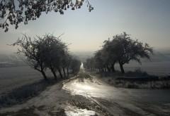 Грунтовая дорога, деревья, рассвет, поле, картинки, скачать