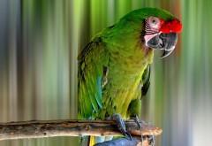 Симпатичный зеленый попугайчик