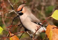 Красивая птаха на ветке