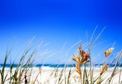 Море, песчаный пляж, голубое небо, солнце, картинки, ска…
