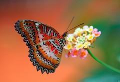 Бабочка на цветке заставки на рабочий стол скачать