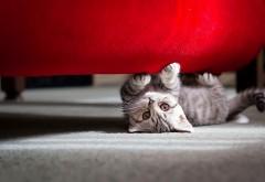 Маленький котик картинки скачать