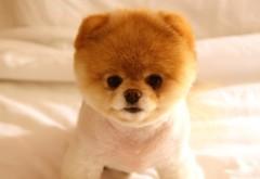 Широкоформатные картинки милой собачки скачать
