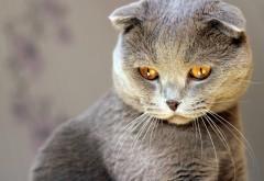 Серый кот прикольные картинки