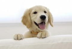 Белая собачка заставки