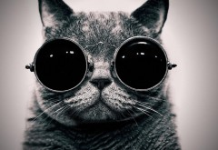 Смешной кот в очках картинки скачать