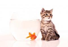 Котёнок с рыбкой обои