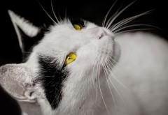 Кот с желтыми глазами скачать заставки на рабочий стол