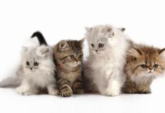 Четыре маленьких котёнка обои