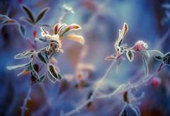 Ледяной цветок широкоформатные заставки скачать