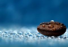 Макро обои кофейного зерна