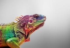 Ящерица цветная хамелеон обои hd