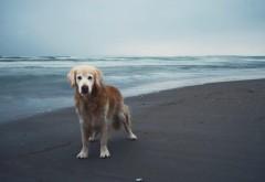 Собака друг человека на пляже обои hd