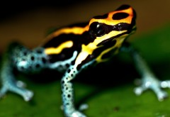 Лягушка фото