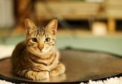 Кошка взгляд лицо обои hd