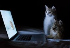 Два кота наблюдают за кошкой на экране