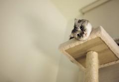 Вид кошки с верху обои hd