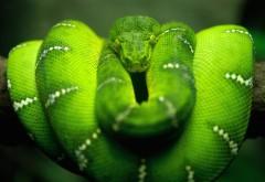 Зеленая змея обои hd