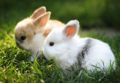 Два маленьких милых кролика