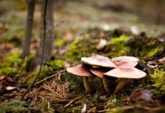 Грибы в лесу картинки на рабочий стол