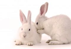 Кролики Full HD обои