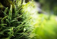 Зеленая трава макро картинки на рабочий стол