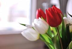Цветы белые и красные тюльпаны картинки на рабочий сто…