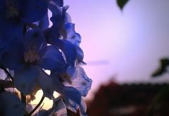 Цветы на природе картинки на рабочий стол