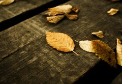 Желтые листья на досках картинки на рабочий стол