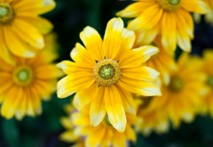 Желтые цветы макро картинки на рабочий стол