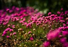 Цветочное поле картинки на рабочий стол