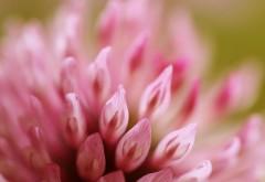 Розовый цветок макро картинки на рабочий стол