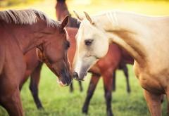 Животные, кони, hd, заставки