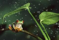 Фото зеленой лягушки под дождем