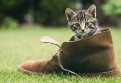 Котенок в ботинки заставки на рабочий стол hd