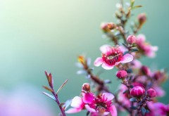 Макро цветы заставки на рабочий стол hd
